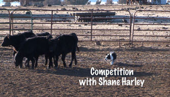 Dog training video: Competition