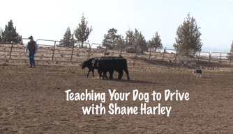 Dog Taining Video: Teaching your dog to drive.