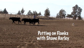 Dog TrainingVideo: Putting on Flanks