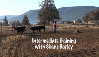 Dog training video: intermediate training.