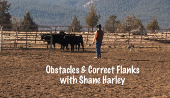 Dog Training Video: Obstacles and the importance of correct flanks.