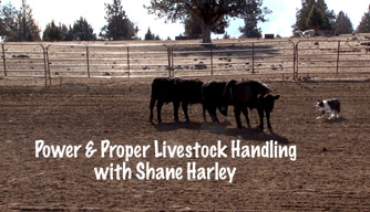 Dog Training Video: Power and proper livestock handling.
