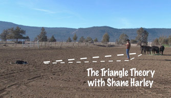 Video: The Triangle theory of dog training.